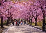 5 DAYS 4 NIGHTS SEOUL, NAMI ISLAND & EVERLAND TOUR WITH INSADONG + EHWA UNIVERSITY : 2018 SPRING / CHERRY BLOSSOM CONFIRM DEPARTURE FROM RM3,690 (PER PERSON)