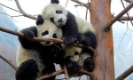 CONFIRM DEPARTURE : 6 DAYS 5 NIGHTS BEIJING & PANDA ZOO